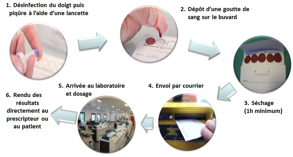 Principe générale du test biologique sur buvard